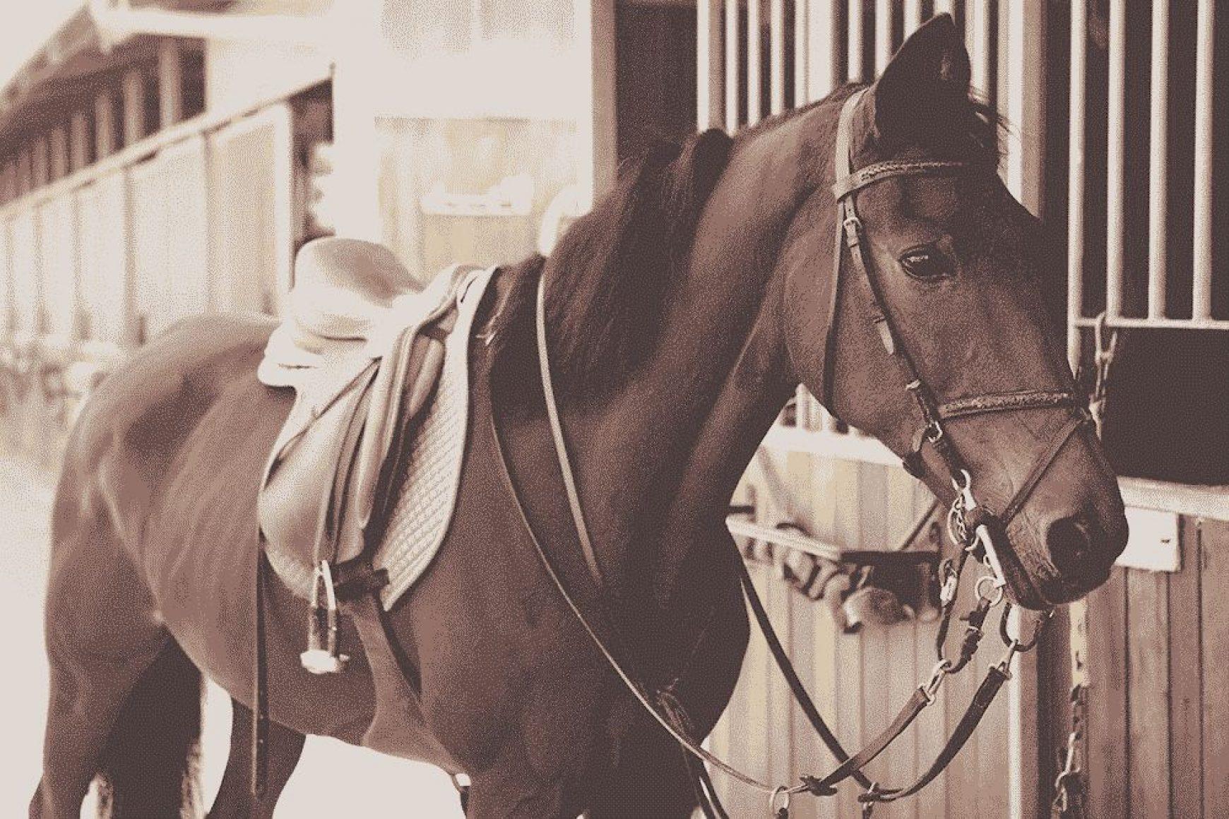 Joy of a Saddle Ride